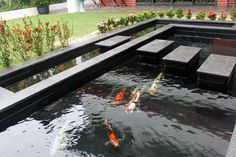 Integrated koi pond design