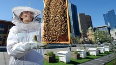 Bee keeper Vanessa Kwiatkowski holds up to bees for inspection.   http://www.weeklytimesnow.com.au/farm-magazine/hive-of-activity/story-fnkf1gpu-1227148643434