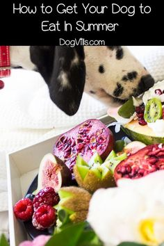 My Dog Won't Eat: Things To put up to Even The Pickiest Pooch *** To know further for this article, visit the image link. My Dog Wont Eat, Can Dogs Eat, Sweet Potato Benefits, Sweet Potatoes For Dogs, Best Dog Food, Homemade Dog Treats, Pet Care Tips, Dog Eating, Canned Pumpkin