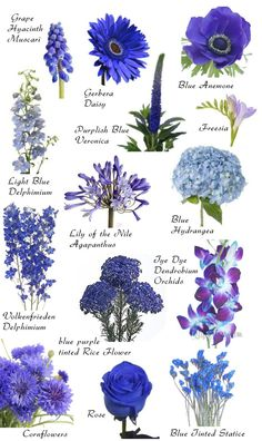 "Blue blooms More Have you ever found a picture of a bouquet and wondered, ""What is that flower?"" Here is a collection of flower names sorted by color. A few bouquet examples are at the bottom and so… Blue Wedding Flowers, Beautiful Flowers, Wedding Blue, Trendy Wedding, Wedding Colors, Blue Flowers Bouquet, Delphinium Bouquet, Dendrobium Orchids, Wild Flowers"