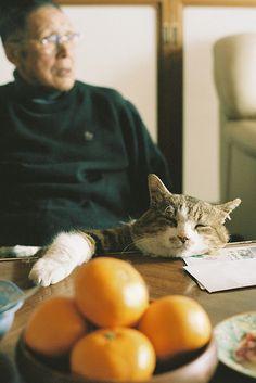 the cat + the oranges.