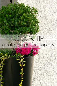 Easy Tip for Creating a Boxwood Topiary