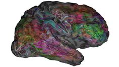 Science news and science articles from New Scientist Brain Science, Science News, Brain Stem, Science Quotes, Cerebral Cortex, Red Words, Craniosacral Therapy, Visual Dictionary, New Scientist