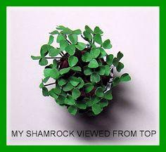 Planta en miniatura