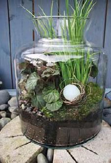 Grow glass plant terrariums