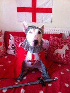 Happy St George's day from Milo & Ze