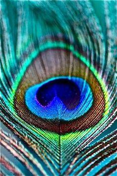 peacock feather, Buddhist symbolism