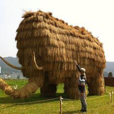「巨大なマンモスが出現!愛媛県西予市宇和町の田んぼの中の藁アート。」 http://instagr.am/p/JvtLSnEXxX/
