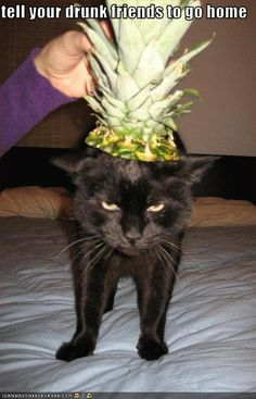 Pineapple Kitteh