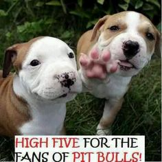 High five, high four.. we don't care just LOVE US!  Pit Bull