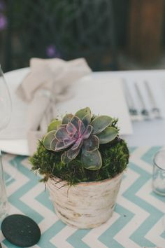succulent + moss centerpieces wrapped in birch, photo by Fondly Forever http://ruffledblog.com/intimate-big-sur-wedding #centerpieces #succulents #wedding