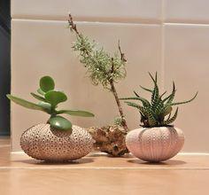 Bec I am.: Plants in Shells