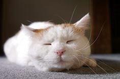 Sleeping SHIRO.   From: http://kagonekoshiro.blog86.fc2.com/
