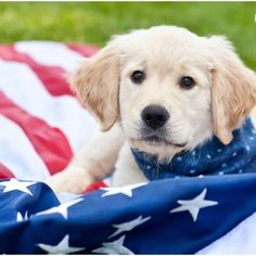Have a Happy Memorial Day Weekend! ~ From Rick and Sugar. #Puppy #Patriotic