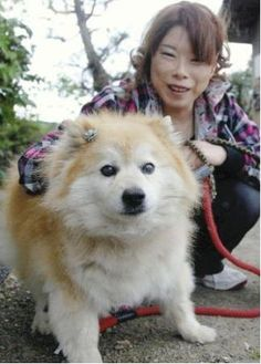 World's oldest living dog: 26 years old! Of course he would be Japanese! Lives in Sakura, Japan, and was born in 1985. That pup is older than I am...