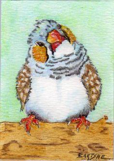 Debra Bartshe Photos on Myspace Bird Illustration, Illustrations, Black Pen Sketches, Zebra Finch, Chicken Art, Australian Birds, Bird Artwork, Backyard Birds, Mini Paintings