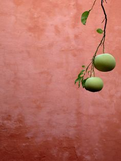 riad ~ETS #fruit #photography #pink