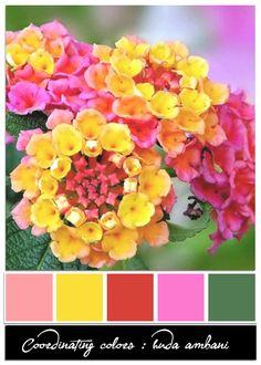 Memories I Love Colour Harmony Flowers Pictures Plants Color Memoirs