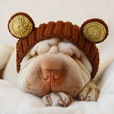 Knitted dog hats and crochet costumes for your dog. Transform your dog into a teddy bear with this Grizzly Bear dog snood from Zoo Snoods. Dog Costumes, Costume Ideas, Sharpei Dog, Dog Snood, Crochet Costumes, Shar Pei, Crochet Bear, Brown Bear, Cute Pictures