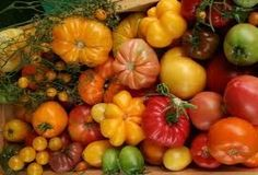 Growing Organic Tomatoes Vegetable Planting Guide - Cyprus Gardener - information, tips and advice on growing organic produce in a Mediterranean climate Organic Vegetables, Fruits And Vegetables, Veggies, Fruit And Veg, Fresh Fruit, Vegetable Planting Guide, Composting At Home, Diet Meal Delivery, Tomato Farming