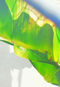plant portraits by Justina Blakeney