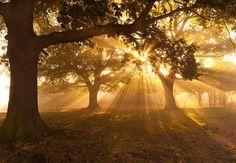 good morning sunshine ~