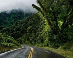 ¡El verde de Las Yungas Tucumanas te espera! Vení a visitarnos 🌿#TucumánTuDestino #SentíTucumán. . . . #VivíArgentina #Tucuman #Norte… Country Roads, Nature, Instagram, Travelling, Sign, Google, Places To Visit, Countries, Tourism