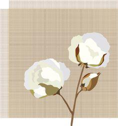 cotton-plant-label-vector-id174555963 (399×429)