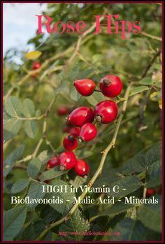 ROSE HIP Medicine - Studio Botanica