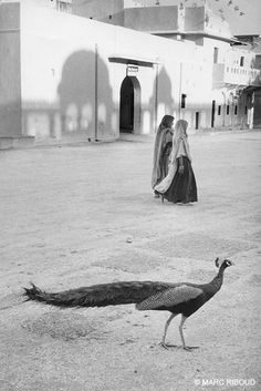 Inde, 1956