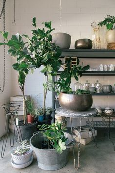 Room plants ideas indoor plants decor ideas living room plant to freshen up your home hanging Mini Plants, Indoor Plants, Indoor Gardening, Decoration Plante, Ceramic Flower Pots, Interior Plants, Plantation, Armoire, Interiores Design