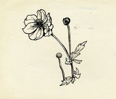 Meadow-Flowers - Sylvia Plath