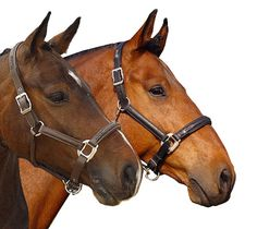 simply gorgeous equine | Leather Horse Halters | Crystal Halters | Bling Halters | Show Halters ...
