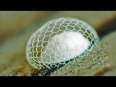 ANIMAL ARCHITECTS : MIND BLOWING COCOON  : watching this little video is compulsory ... |  nature's knitters