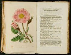 Botanical Register