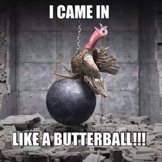 These 10 Turkey Memes Are Perfect for Thanksgiving - Wide Open Spaces