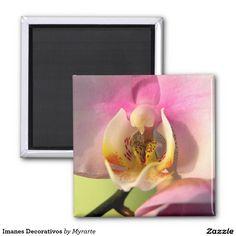 Decorative magnets #imanes #magnets