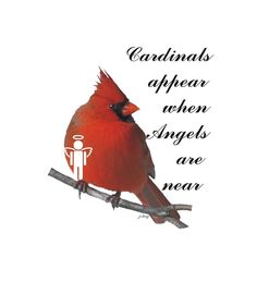 Digital Art Digital Art - Cardinals And Angels by Jacquie King
