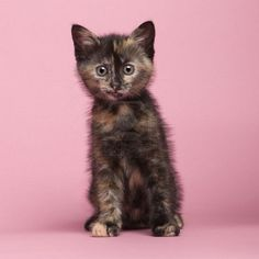 Baby tortie!  Want to eat her in a stew! Look at those toes!