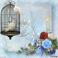 img1.picmix.com output pic normal 3 5 4 3 5593453_350dc.gif Beautiful Gif, Beautiful Roses, Beautiful Pictures, Pretty Birds, Beautiful Butterflies, Bird Gif, Glitter Gif, Marjolein Bastin, Cute Photography