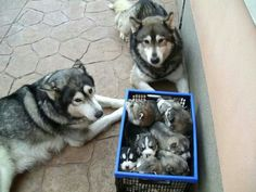 The whole family