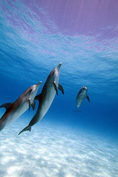 Trio of Dolphins
