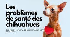 Bien qu'ils soient les plus petits de toutes les races de chiens, les Chihuahuas sont connus pour leur grande personnalité et ... Le Chihuahua, Chihuahuas, Blog, Health Challenge, Dog Breeds, Everything, Chihuahua Dogs, Chihuahua, Blogging