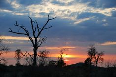Leadwood tree and African sunset | Flickr - Photo Sharing!