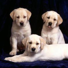 beaux chiens et chiots - Recherche Google