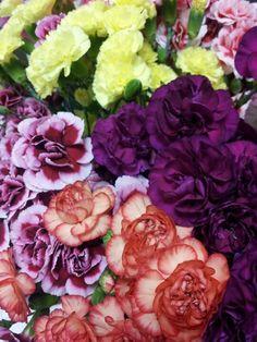 benchmark carnation growers | Mini Carnations galore! | Flora | Pinterest