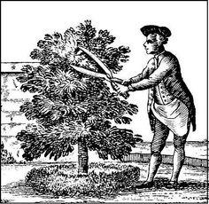 Early American Gardens