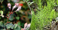 Rädda rosorna: Hejda mjöldaggen med ogräs | LAND.se Bird, Garden, Flowers, Animals, Compost, Garten, Animales, Animaux, Birds