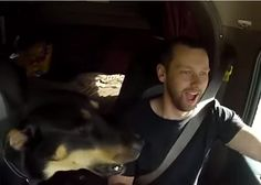 Check out this video and try to tell if this dog really loves the air horn as much as this truck driver thinks that he does.