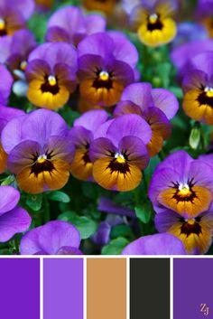 ZJ Colour Palette 94 #colourpalette #colourinspiration